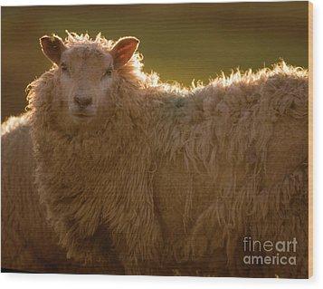 Welsh Lamb In Sunny Sauce Wood Print by Angel  Tarantella