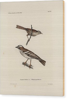 White-browed Sparrow-weaver And Grass Or Bush Warbler Wood Print by J D L Franz Wagner