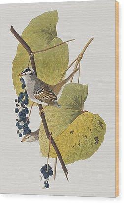 White-crowned Sparrow Wood Print by John James Audubon