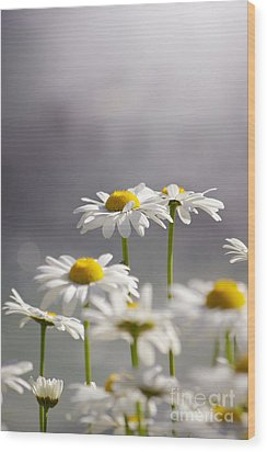 White Daisies Wood Print by Carlos Caetano