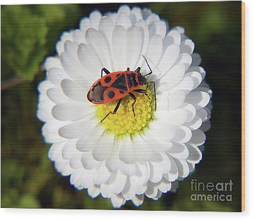 Wood Print featuring the photograph White Flower by Elvira Ladocki