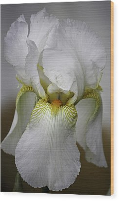 White Iris Wood Print by Teresa Mucha