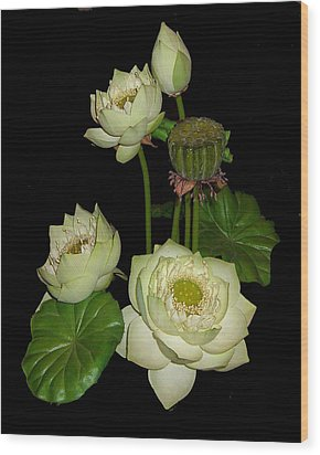 White Lotus Blossoms Wood Print by Merton Allen