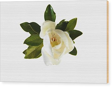 White Magnolia Flower And Leaves Isolated On White  Wood Print by Michael Ledray