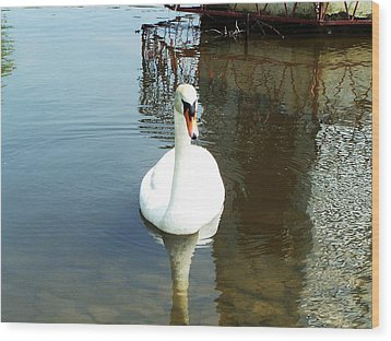 White North American Mute Swan Wood Print by Alex Roussinov