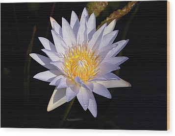 Wood Print featuring the photograph White Water Lily by Steve Stuller