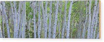White Wilderness Panorama Wood Print by James BO Insogna