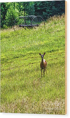 Wood Print featuring the photograph Whitetail Deer And Hay Rake by Thomas R Fletcher