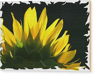 Wood Print featuring the photograph Wild Sunflower by Shari Jardina