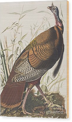 Wild Turkey Wood Print