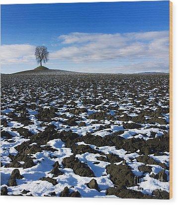 Winter Tree. Wood Print by Bernard Jaubert