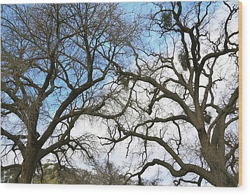 Wood Print featuring the photograph Winter Trees At Fort Tejon Lebec California  by Floyd Snyder