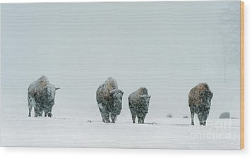 Wood Print featuring the photograph Winter's Burden II by Sandra Bronstein