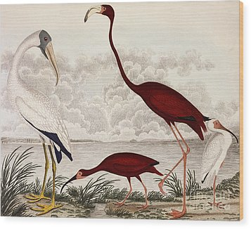 Wood Ibis, Scarlet Flamingo, White Ibis Wood Print
