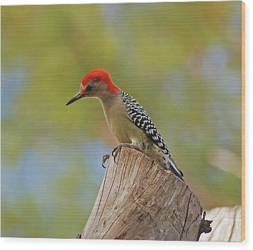 Wood Print featuring the digital art 1- Woodpecker by Joseph Keane