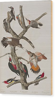Woodpeckers Wood Print by John James Audubon
