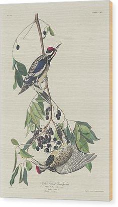 Yellow-bellied Woodpecker Wood Print by John James Audubon