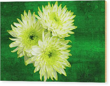 Yellow Chrysanthemums On A Green Background. Wood Print by Paul Cullen