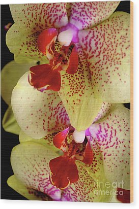 Wood Print featuring the photograph Yellow Orchid by Dariusz Gudowicz