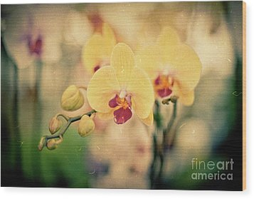 Wood Print featuring the photograph Yellow Orchids by Ana V Ramirez