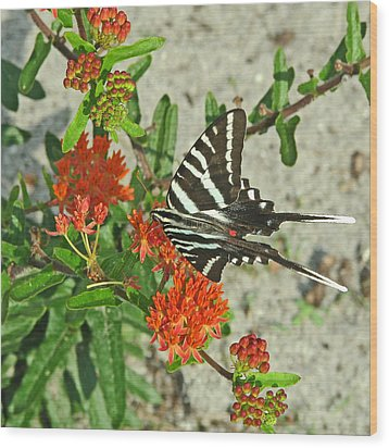 Wood Print featuring the photograph Zebra Swallowtail by Peg Urban