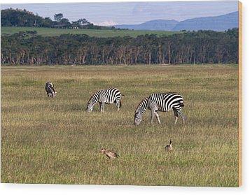 Zebras - Zebres Wood Print