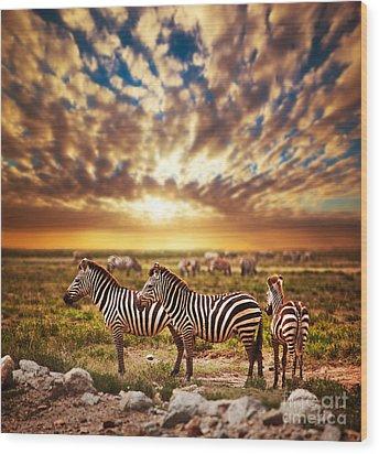 Zebras Herd On African Savanna At Sunset. Wood Print