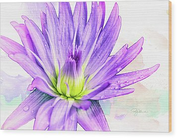 10889 Purple Lily Wood Print by Pamela Williams