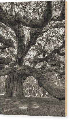 Angel Oak Live Oak Tree Wood Print by Dustin K Ryan