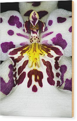Exotic Orchid Flower Wood Print