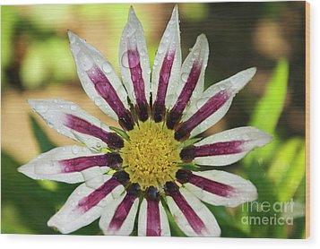 Nice Flower Wood Print by Elvira Ladocki