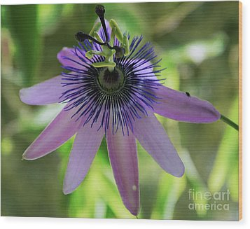Purple Passiflora Wood Print