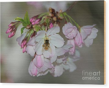 Silicon Valley Cherry Blossoms Wood Print by Glenn Franco Simmons