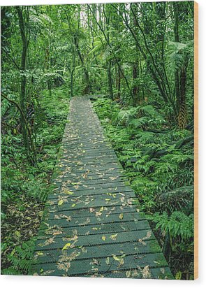 Wood Print featuring the photograph Forest Boardwalk by Les Cunliffe