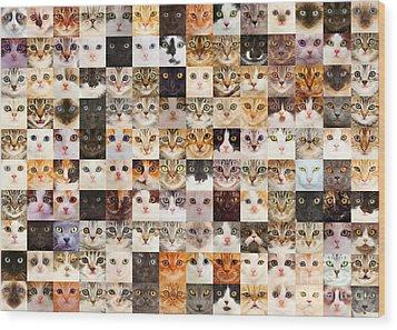 140 Random Cats Wood Print