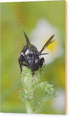 Bee Wood Print by Andre Goncalves