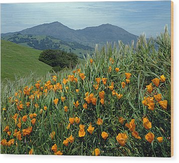 1a6493 Mt. Diablo And Poppies Wood Print