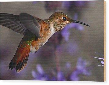 Allen's Hummingbird Wood Print