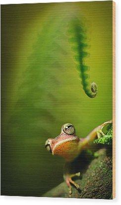 Amazon Tree Frog Wood Print
