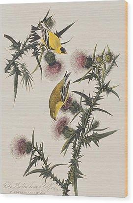 American Goldfinch Wood Print by John James Audubon