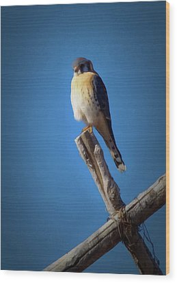 Wood Print featuring the digital art American Kestrel by Ernie Echols