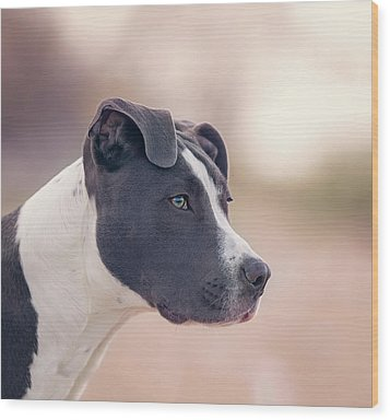 Wood Print featuring the photograph American Pitbull Terrier by Peter Lakomy