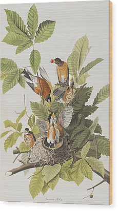 American Robin Wood Print by John James Audubon