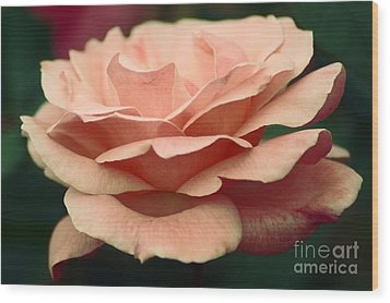 Antique Rose Wood Print by Donna Bentley