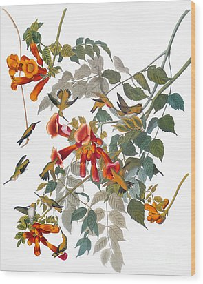 Audubon: Hummingbird Wood Print by Granger