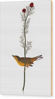 Audubon: Warbler, (1827) Wood Print by Granger