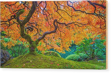 Wood Print featuring the photograph Autumn's Jewel by Patricia Davidson