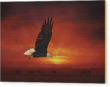 Bald Eagle Wood Print by Gouzel -