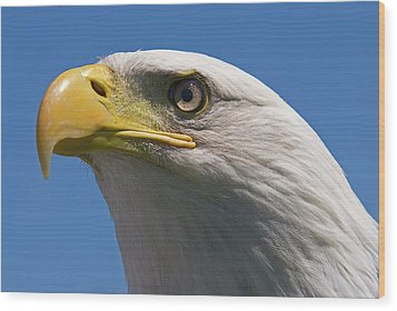 Wood Print featuring the photograph Bald Eagle by JT Lewis