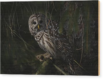 Wood Print featuring the photograph Barred Owl In Pine Tree by Michael Cummings